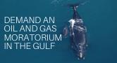 Demand Oil and Gas Moratorium in the Gulf