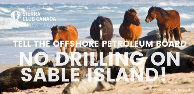 Tell the Offshore Petroleum Board No Drilling on Sable Island.