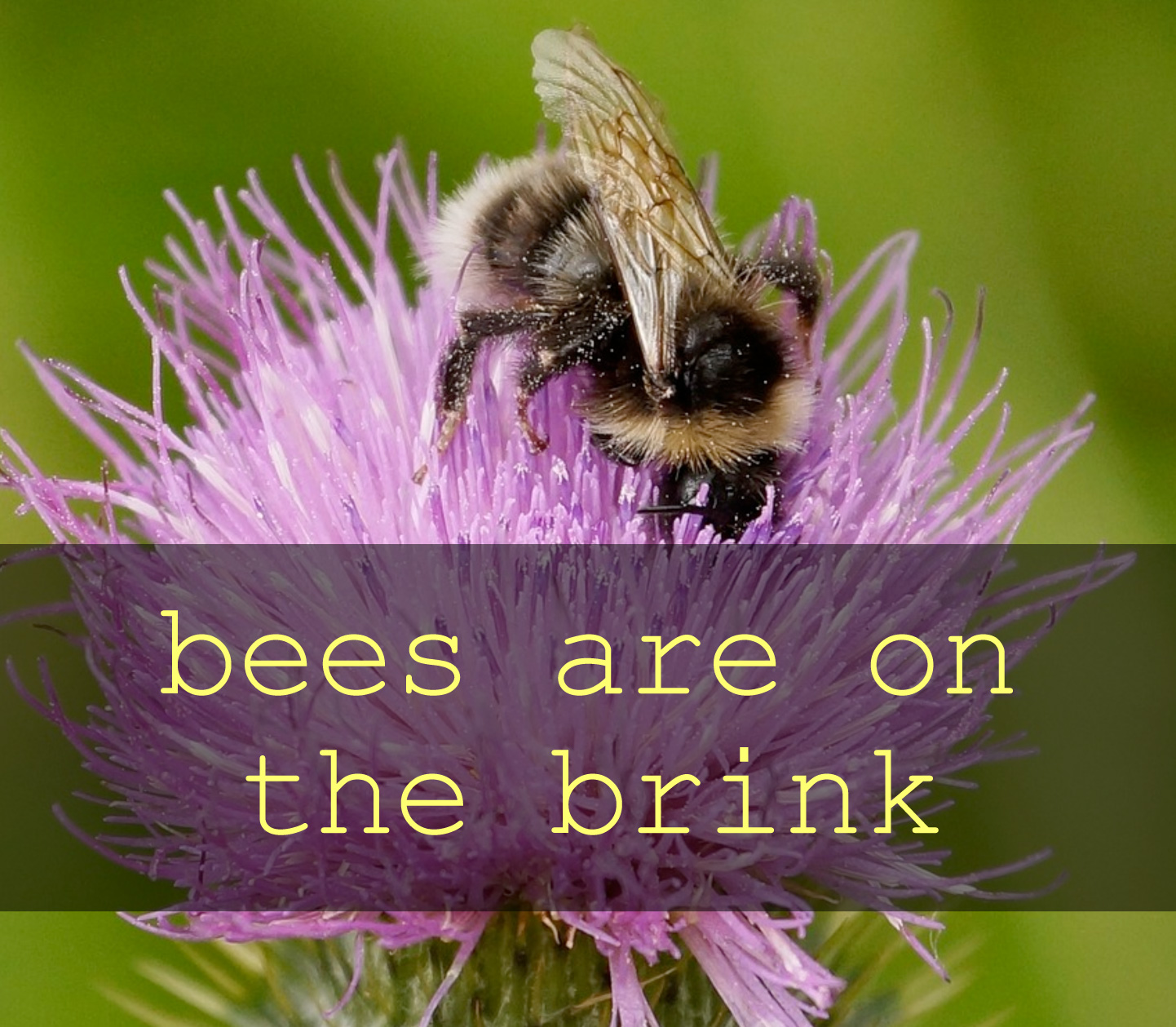 Bees on the brink