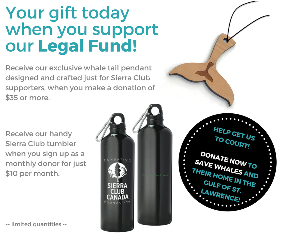 Your gift today when you support our Legal Fund.