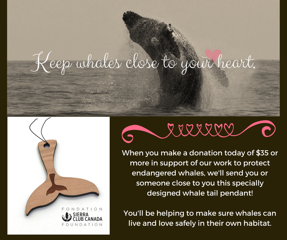 Keep whales close to your heart with this special whale tail pendant.