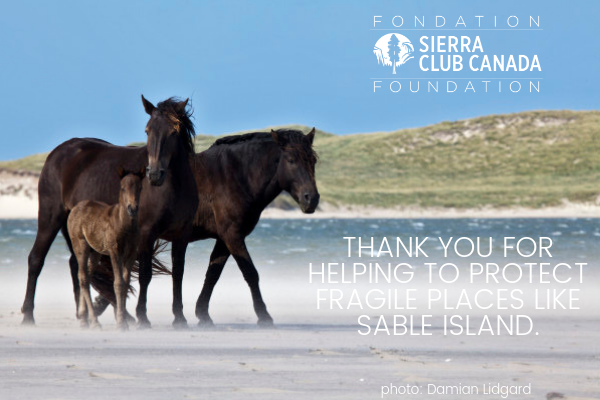 Thank You For Heling To Protect Fragile Places Like Sabke Island