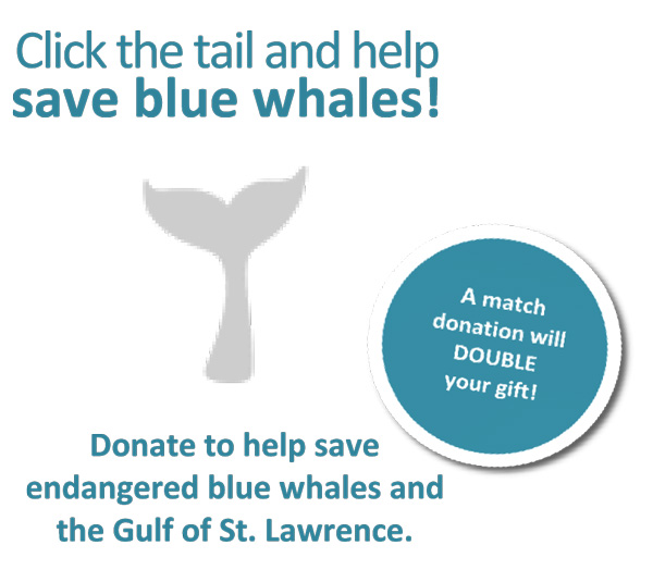 Donate to help save blue whales!