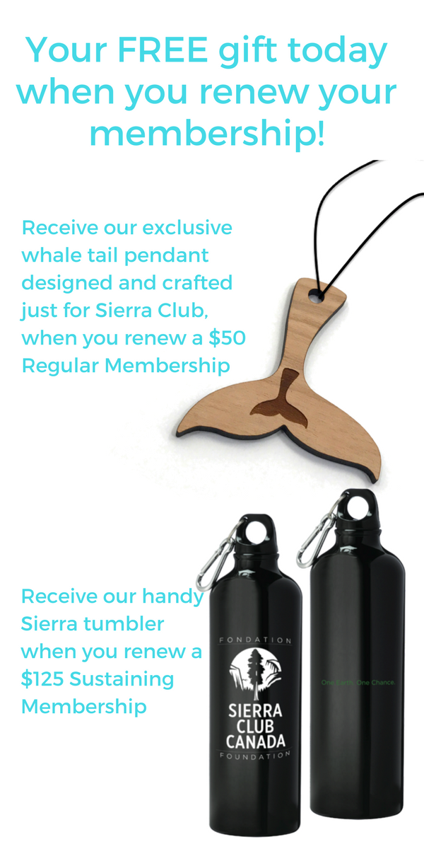 Your free gift when you renew your membership today