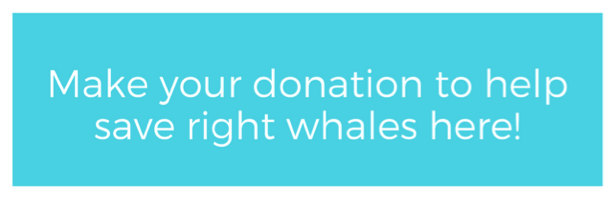 Make your donation to save right whales here.