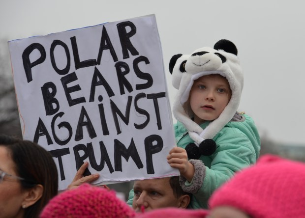 Polar bears against Rump image