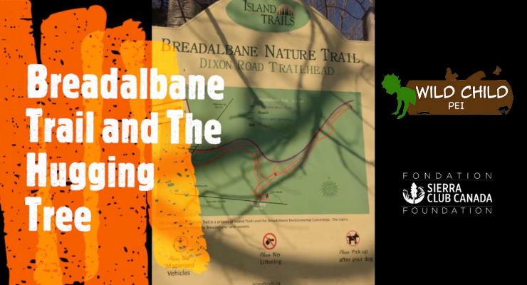 Exploring the Breadalbane Trail and a Special Reading of The Hugging Tree #COVID19
