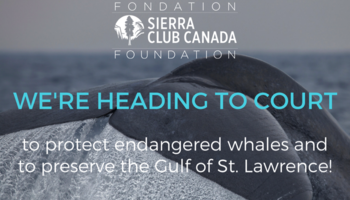 We're going to court to protect endangered whales and to preserve the Gulf of St. Lawrence