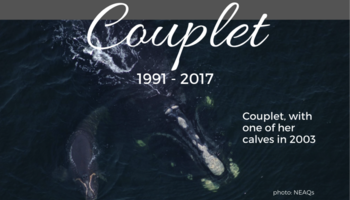 Couplet  1991-2017