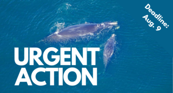 Urgent Action - send your letter today.
